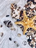 Variety of sea shells and stars. A variety of sea shells and stars Royalty Free Stock Photos