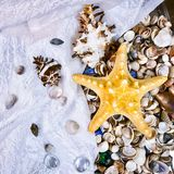 Variety of sea shells and stars. A variety of sea shells and stars Stock Photography