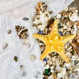Variety of sea shells and stars. A variety of sea shells and stars Royalty Free Stock Image