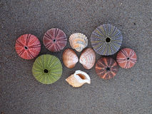 Variety of sea shells, urchins and clams Stock Photos