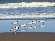 A Variety of Seabirds Royalty Free Stock Images