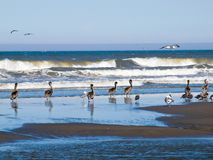 A Variety of Seabirds at the Seashore Stock Image