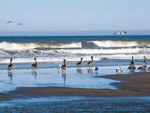 A Variety of Seabirds at the Seashore Stock Image