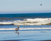 A Variety of Seabirds at the Seashore Royalty Free Stock Photos