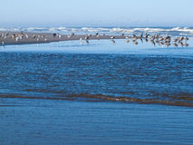 A Variety of Seabirds at the Seashore Royalty Free Stock Images