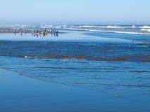 A Variety of Seabirds at the Seashore Royalty Free Stock Photo