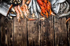 variety of seafood on a fishing net. Royalty Free Stock Image