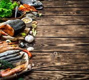 Variety of seafood shrimp, fish, and shellfish. Stock Images