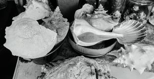 Variety of seashells in black and white Royalty Free Stock Photography