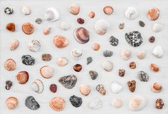 Variety of seashells on white wooden surface. Seashell background. Variety of seashells on white wooden surface stock photos