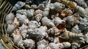 A variety of seashells in wicker basket.  stock footage