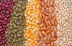 Variety of seeds Royalty Free Stock Images