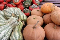 Bright and colorful large pumpkins and squash on tables at outdoor section of nursery stock image