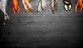 Variety of shrimp, fish, and shellfish. Royalty Free Stock Images