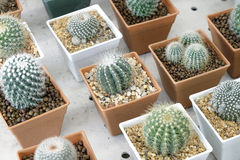 Variety of small beautiful cactus in the pot Royalty Free Stock Images