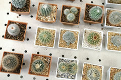 Variety of small beautiful cactus in the pot Stock Images