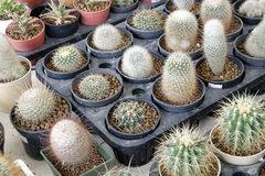 Variety of small beautiful cactus in the pot Royalty Free Stock Photography