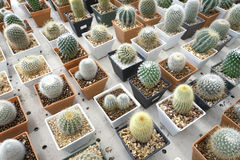 Variety of small beautiful cactus in the pot Stock Photo