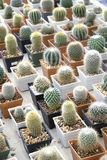 Variety of small beautiful cactus in the pot Stock Photos