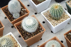 Variety of small beautiful cactus in the pot Royalty Free Stock Image