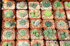 Variety of small beautiful cactus in the pot, seen from top Royalty Free Stock Images