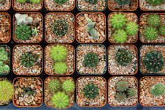 Variety of small beautiful cactus in the pot, seen from top Royalty Free Stock Image