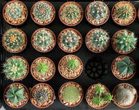 Variety of small beautiful cactus in the pot, seen from top Stock Photography