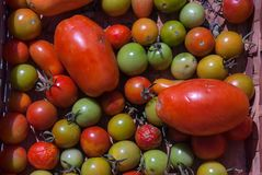 Tomatoes, Pachino, Ciliegino e San Marzano, produced in Campania, Italy. stock photography