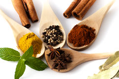 Variety of spices and aromatic herbs Stock Images