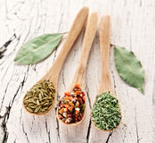 Variety of spices in the spoons. Stock Photography
