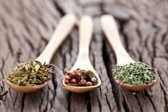 Variety of spices in the spoons. Stock Images