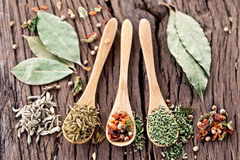 Variety of spices in the spoons. Royalty Free Stock Image