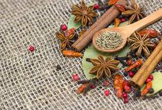 A variety of spices Royalty Free Stock Image