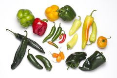 Variety, spicy and coloured chilies, of different sizes Royalty Free Stock Photos