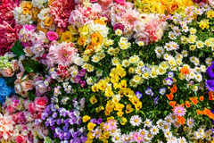 Variety of spring flowers Royalty Free Stock Image