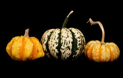 Variety of squash Stock Photos