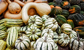 Variety of Squash Royalty Free Stock Images
