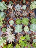 Variety of succulent cactus plants in flowerpot. View from above, background and texture, nature and botany stock photos