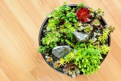 Succulent garden in a pot Stock Images