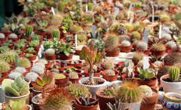 Variety of succulents and catcus stock photos