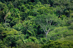 Variety of tall trees in tropical rainforest jungle Stock Photo