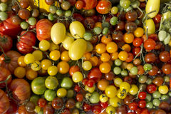 Variety tomatoes Stock Photography