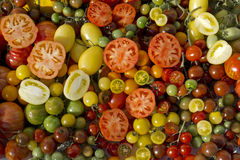 Variety tomatoes Royalty Free Stock Photos