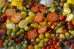Variety tomatoes Stock Images