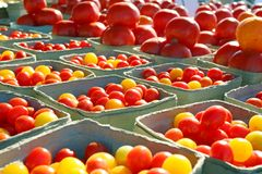 Variety of Tomatoes at Outside Farmer's Market. Baskets of small yellow and orange cherry tomatoes are in the foreground with large tomatoes in the background at Stock Photography