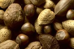 Variety of tree nuts Royalty Free Stock Photography