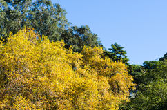 Variety of trees Royalty Free Stock Photos