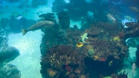 A variety of tropical fish over a coral reef.  stock footage
