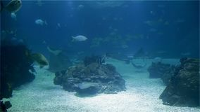 A variety of tropical fish over a coral reef.  stock video footage