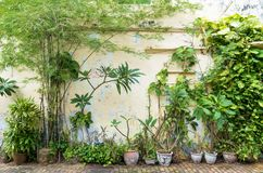 Variety types of plants. Beside the street Royalty Free Stock Photos